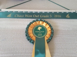 Rosette Holders, Rosette Holder , Ideas for dog show ribbons ,