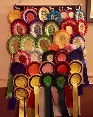 rosette Holder , Rosette Display , Rosette display holder, horse rosette board