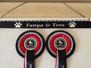 show rosettes, dog show rosettes. ideas for dig show rosettes, how to display rosettes. rosettes